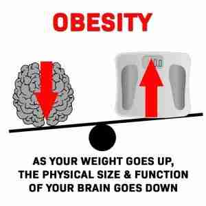 How obesity affects our brain