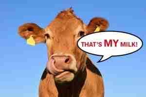 that's my milk!
